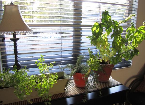 Indoor Herb Garden Goes Outdoor Domestic Wannabe