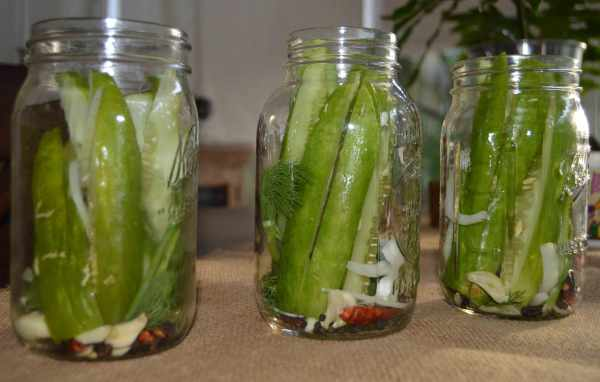 Homemade-spicy-dill-pickles-2